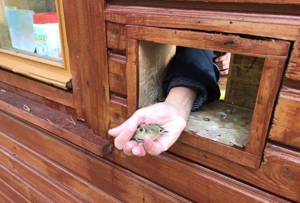Случай в посёлке Рыбачий