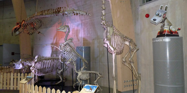 Древние животные. Центр АХХАА