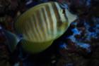 Жизнь в аквариуме. Центр АХХАА