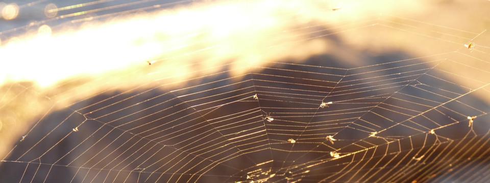 Золотая паутинка