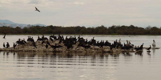 Бакланы на озере Керкини