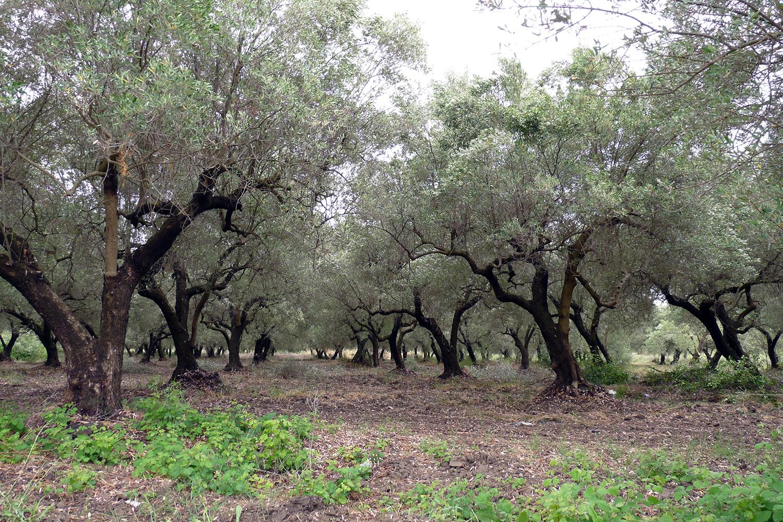 Благодатная греческая земля