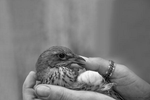 На благо птиц!