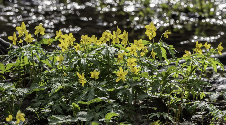 Весна в Измайловском лесу
