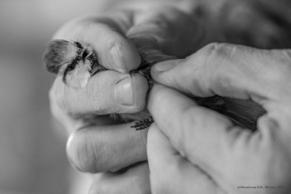 К птицам за счастьем