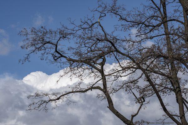 Я - дерево